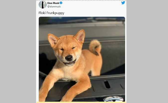 Elon Musk's Twitter post provokes rally in SHIB coin